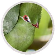 Green Turaco Bird Portrait Round Beach Towel