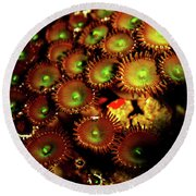 Round Beach Towel featuring the photograph Green Button Polyps by Anthony Jones