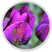 Aphids On Purple Tulips Round Beach Towel