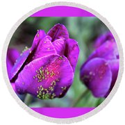 Aphids On Purple Tulips Round Beach Towel