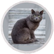 Round Beach Towel featuring the photograph Green Eye Stare Cat Square by Terry DeLuco