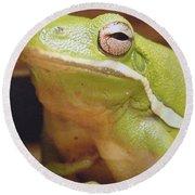 Green Frog Round Beach Towel by J R Seymour