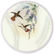 Round Beach Towel featuring the painting Green-fronted Hummingbird Amazilia Viridifrons by John and Elizabeth Gould