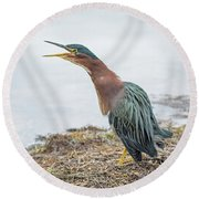 Green Heron 1336 Round Beach Towel by Tam Ryan