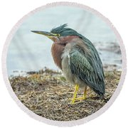 Green Heron 1340 Round Beach Towel by Tam Ryan