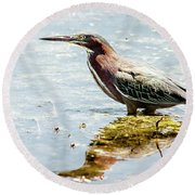 Round Beach Towel featuring the photograph Green Heron Bright Day by Robert Frederick