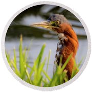 Green Heron Closeup  Round Beach Towel