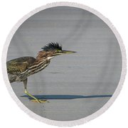 Green Heron On A Mission Round Beach Towel