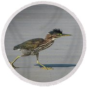 Round Beach Towel featuring the photograph Green Heron On A Mission by Cindy Lark Hartman