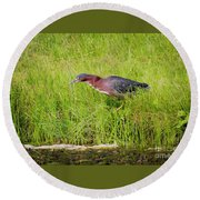 Round Beach Towel featuring the photograph Green Heron On The Hunt by Ricky L Jones
