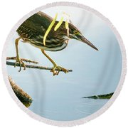 Round Beach Towel featuring the photograph Green Heron Sees Minnow by Robert Frederick