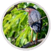 Round Beach Towel featuring the photograph Green Heron by Sumoflam Photography
