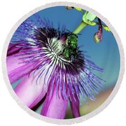 Green Hover Fly On Passion Flower Round Beach Towel
