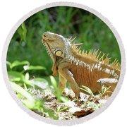 Round Beach Towel featuring the photograph Green Iguana, Iguana Iguana by Breck Bartholomew