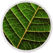 Green Leaf Macro Round Beach Towel