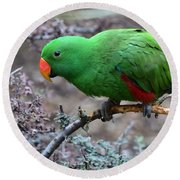 Green Male Eclectus Parrot Round Beach Towel
