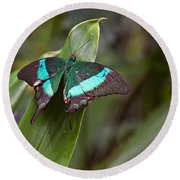 Green Moss Peacock Butterfly Round Beach Towel by Peter J Sucy