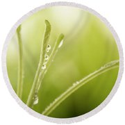 Green Plant With Water Drops Round Beach Towel