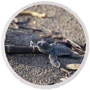 Round Beach Towel featuring the photograph Green Sea Turtle Hatchling by Breck Bartholomew