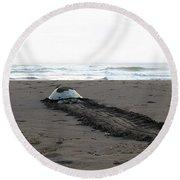 Green Sea Turtle Returning To Sea Round Beach Towel