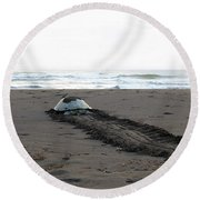 Round Beach Towel featuring the photograph Green Sea Turtle Returning To Sea by Breck Bartholomew