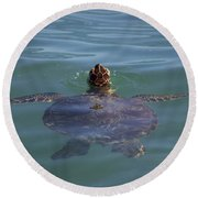 Round Beach Towel featuring the photograph Green Sea Turtle by RKAB Works