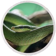 Green Snake On The Branch Round Beach Towel