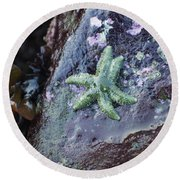 Green Starfish Round Beach Towel by Adria Trail