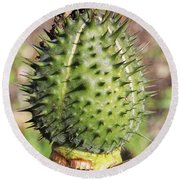 Round Beach Towel featuring the photograph Green Thorn Apple by William Selander