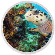 Green Turtle Profile Round Beach Towel