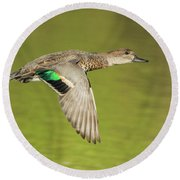 Green-winged Teal 6320-100217-2cr Round Beach Towel