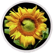 Greenburst Sunflower Round Beach Towel