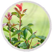 Greenery And Red Round Beach Towel