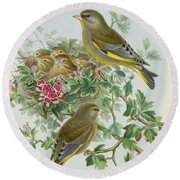 Greenfinch Round Beach Towel by John Gould