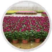 Greenhouse Interior Round Beach Towel