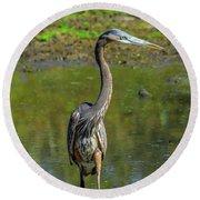 Gret Blue Heron In Pond Round Beach Towel