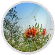 Grevillea With Moon Round Beach Towel