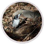 Round Beach Towel featuring the photograph Grey Butcherbird by Nicholas Blackwell