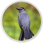 Round Beach Towel featuring the photograph Grey Catbird by Debbie Stahre