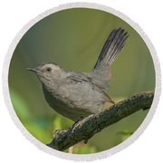 Grey Catbird Img 3 Round Beach Towel