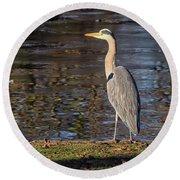 Grey Heron  Round Beach Towel
