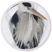 Grey Heron In The Snow Round Beach Towel