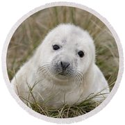 Grey Seal Pup Round Beach Towel