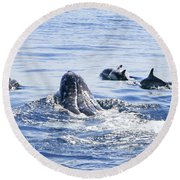 Grey Whale 1 Round Beach Towel