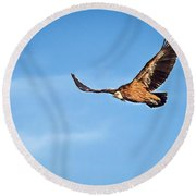 Round Beach Towel featuring the photograph Griffon Vulture by Meir Ezrachi