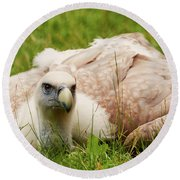 Griffon Vulture Round Beach Towel