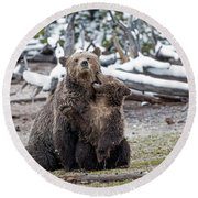 Grizzly Cub Playing With Mother Round Beach Towel