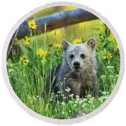 Round Beach Towel featuring the photograph Grizzly Cub Snow In The Flowers by Yeates Photography