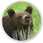 Round Beach Towel featuring the photograph Grizzly Cub by Steve Stuller