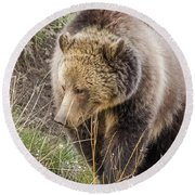 Round Beach Towel featuring the photograph Grizzly Mama by Yeates Photography